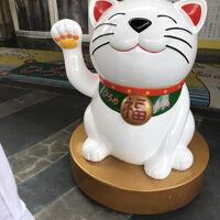 Ryo Misawa's profile picture