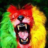 Fabrice's profile picture
